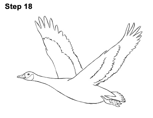 How to Draw Canadian Goose Flying Wings 18
