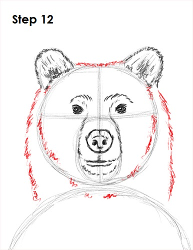 Grizzly Bear Face Drawing Bear Face Drawing