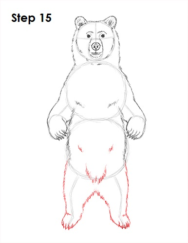 How to draw a cartoon grizzly bear - photo#19