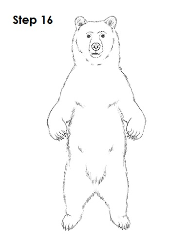 how to draw a bear grizzly