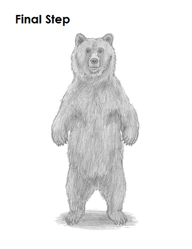 draw grizzly bear last