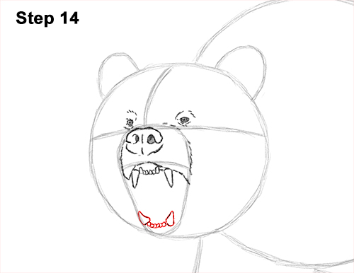 Draw a Growling Grizzly Bear Walking 14