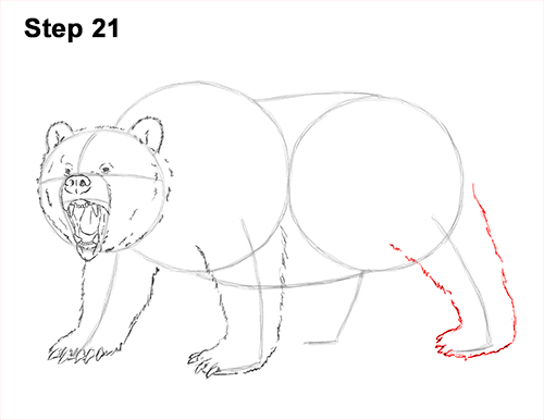 draw a growling grizzly bear walking 21