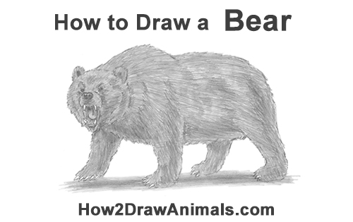 how to draw a growling grizzly bear walking