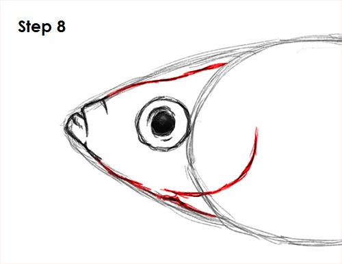 How To Draw A Fish Guppy