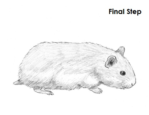 draw hamster final