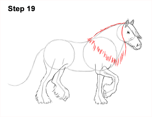How to Draw a Horse Gypsy Vanner Irish Cob 19