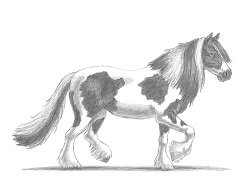 How to Draw a Horse Irish Cob Trotting Walking