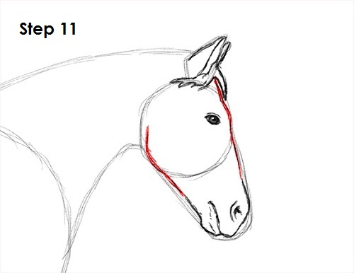 Horse Conformation Structure Soundness and Performance