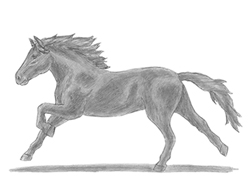 Running arabian horse drawing - photo#22