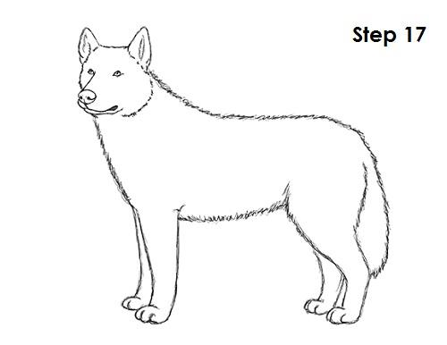 Draw husky 17