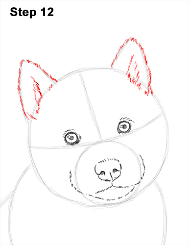 Draw Husky Puppy Dog 12