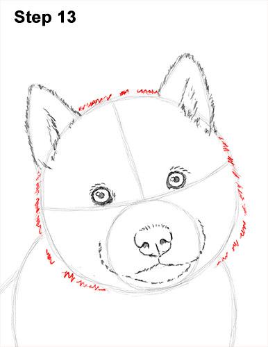 Draw Husky Puppy Dog 13