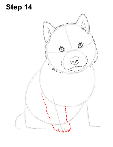 Draw Husky Puppy Dog 14