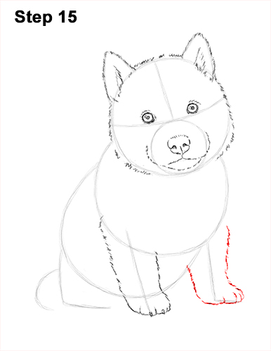 Draw Husky Puppy Dog 15