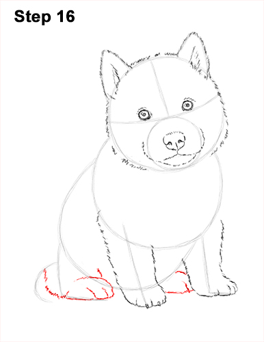 Draw Husky Puppy Dog 16