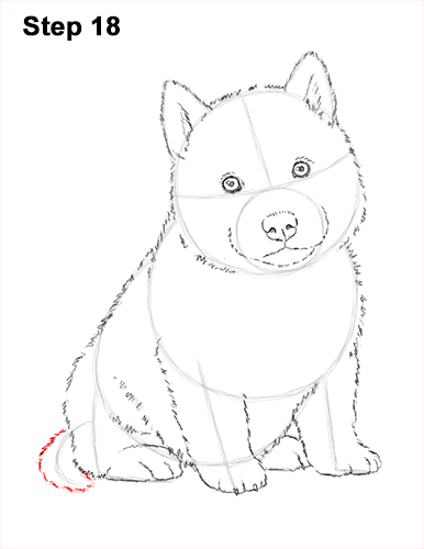 Draw Husky Puppy Dog 18