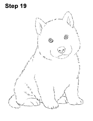 Draw Husky Puppy Dog 19