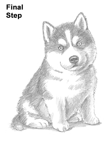 How to Draw a Puppy Husky
