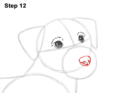 How to Draw a Cute Jack Russell Terrier Puppy Dog 12