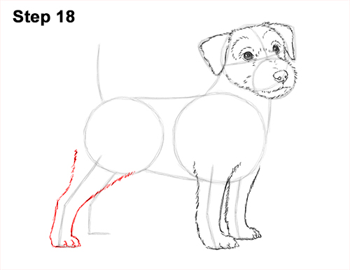 How to Draw a Cute Jack Russell Terrier Puppy Dog 18