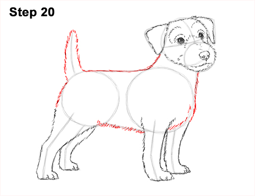 How to Draw a Cute Jack Russell Terrier Puppy Dog 20