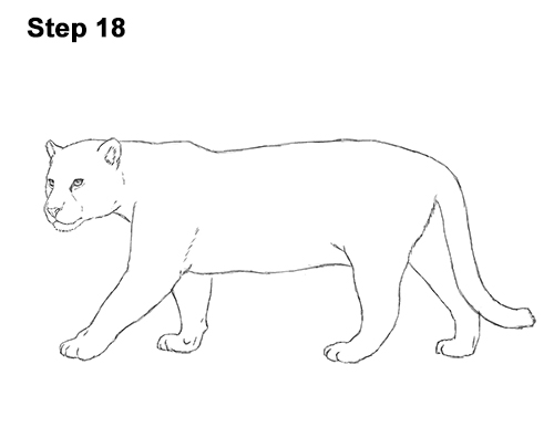 draw jaguar big cat 18