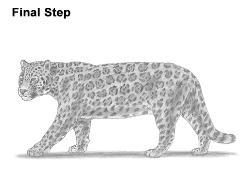 draw jaguar big cat