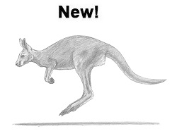 How to Draw a Kangaroo jumping hopping