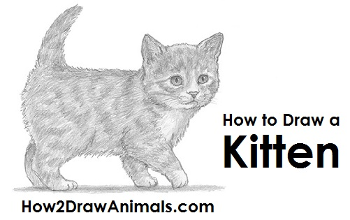 How To Draw A Realistic Kitten Step By Step Easy
