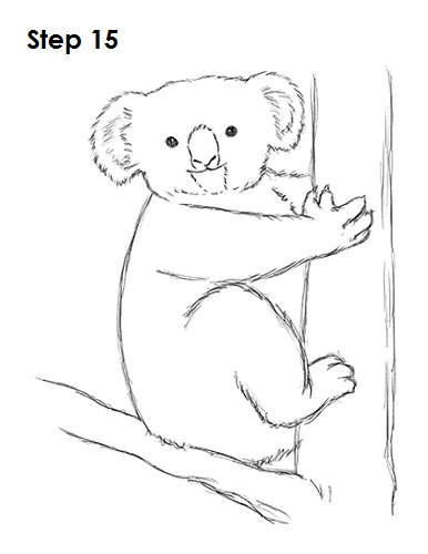 Line Drawing Koala : How to draw a koala