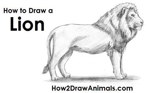 please pause the how to draw a lion video after each step to draw at your own pace