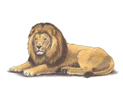 How to Draw a Lion Lying Down Color