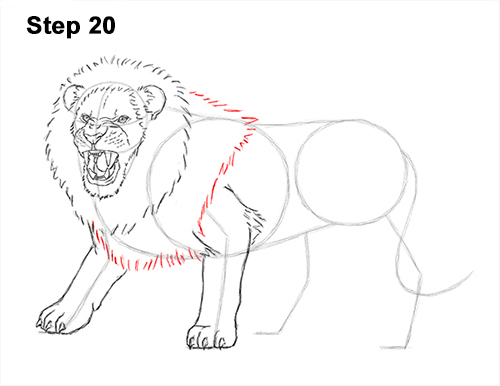 How To Draw A Lion Roaring