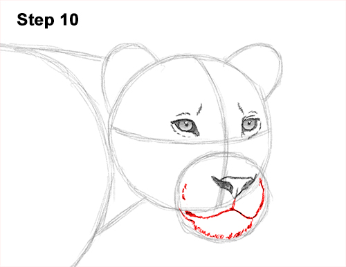 How to Draw a L...
