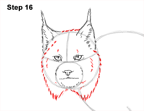 how to draw a lynx head step by step