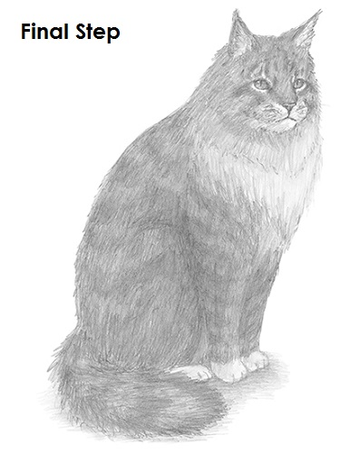 Draw Maine Coon Cat