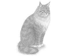 How to Draw a Maine Coon Cat