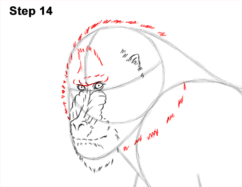 How to Draw Male Mandrill Baboon Monkey Walking 14