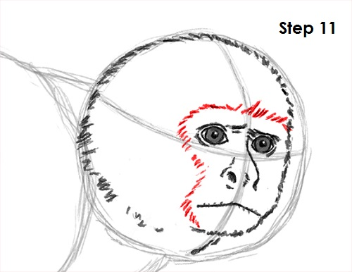 Line Drawing Monkey Face : How to draw a monkey