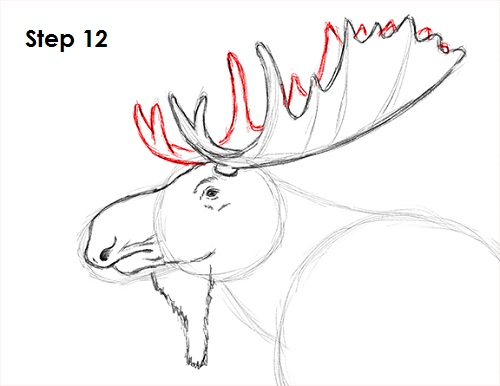 Related keywords suggestions for moose antler drawing for How to draw a moos