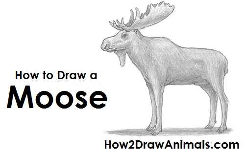 How to draw a moose draw moose thecheapjerseys Images