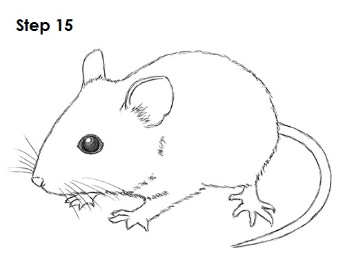 Line Art Mouse : How to draw a mouse