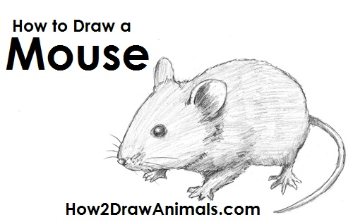 Draw Mouse