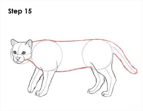 How to Draw an Ocelot Growling Dog Drawing