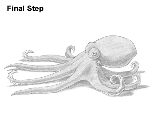 How to Draw an Octopus Swimming Tentacles
