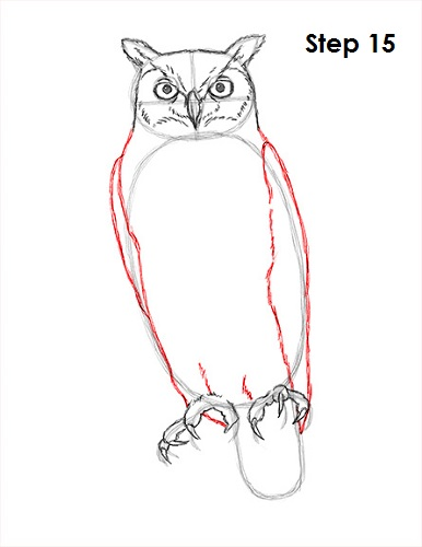 How To Draw An Owl Great Horned