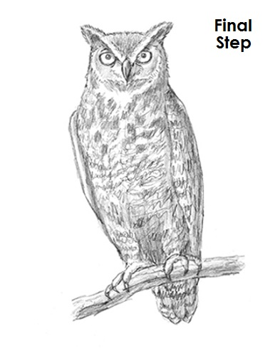 Gallery For gt Great Horned Owls Drawings