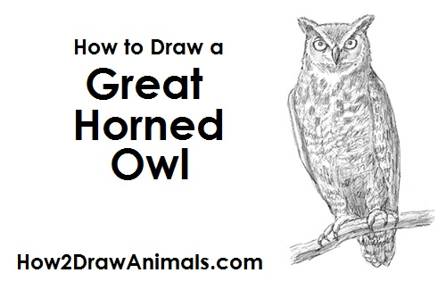 Realistic horned owl drawing for Draw the owl