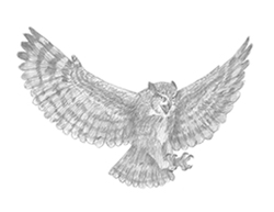 How to Draw a Great-Horned Owl flying